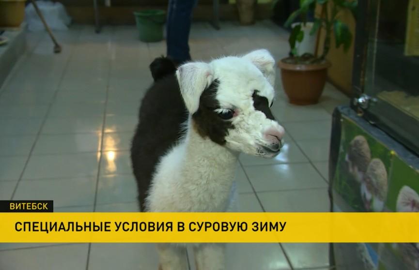 В Витебском зоопарке для животных создали специальные условия на время морозов