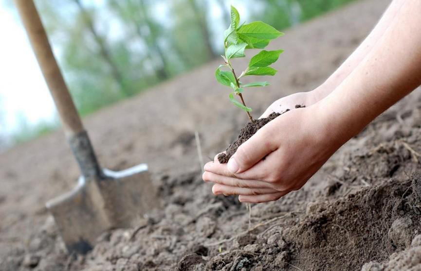 Количество высаженных в Минске деревьев будет фиксироваться онлайн