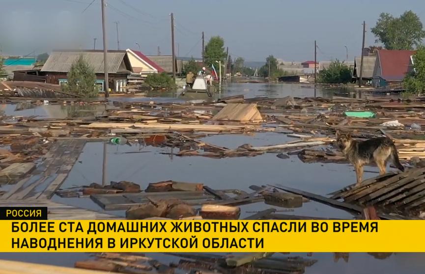 Более 100 домашних питомцев спасли в Иркутской области во время наводнения