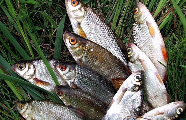 Запретная страсть: за 40 кг нелегальной рыбы получилось 5200 рублей штрафа и уголовное дело