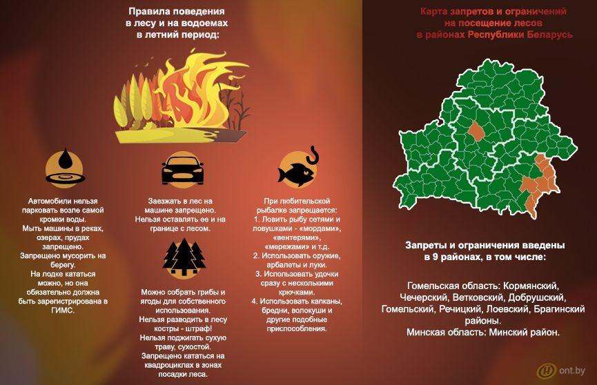 Пожарная опасность! В Беларуси начали вводить запреты на посещение лесов