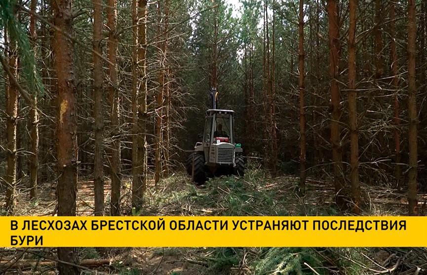 В лесхозах Брестской области устраняют последствия бури