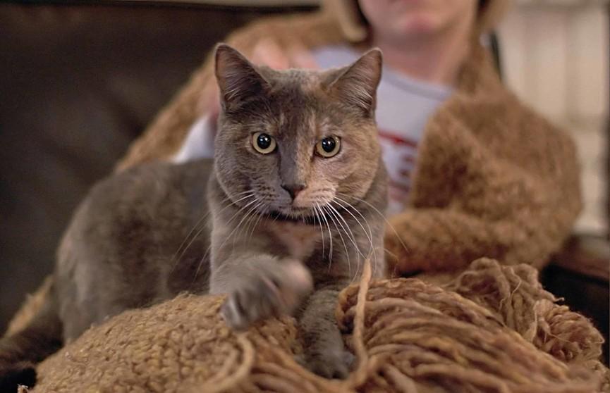 Ученые выяснили, почему кот топчет вас. Причина удивит!