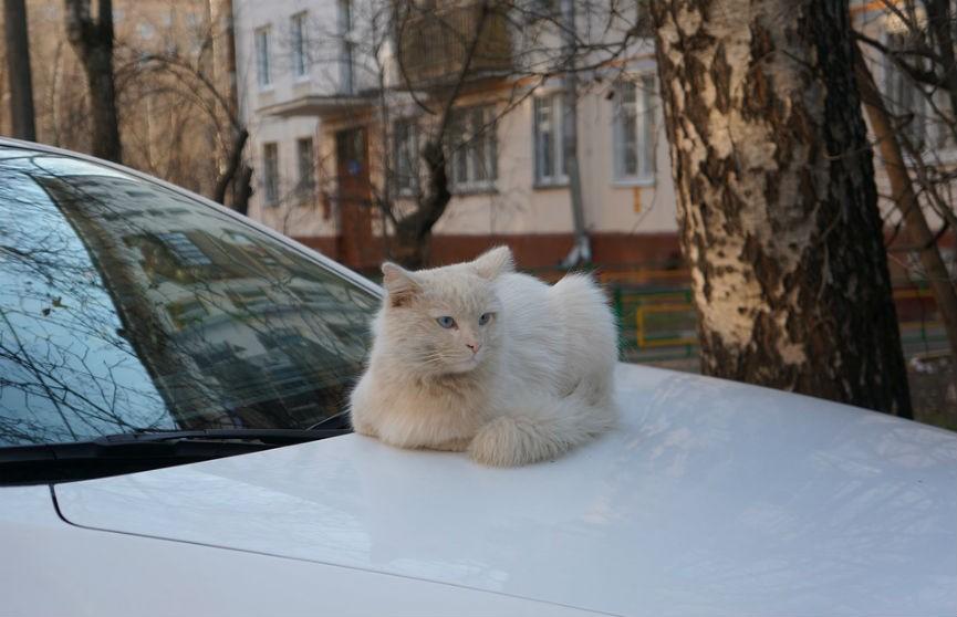 ГАИ напоминает водителям при наступлении холодов проверять, нет ли под авто животных