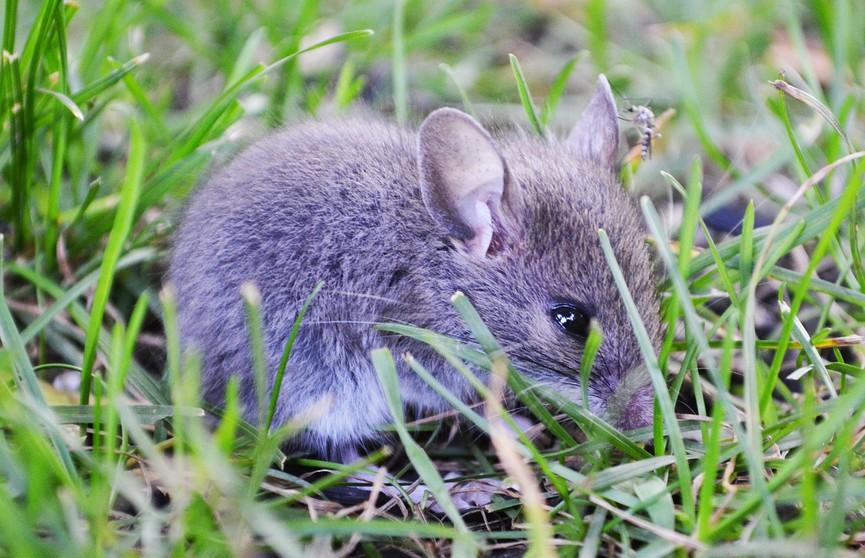 Девушка нашла в доме родителей мышонка и устроила ему пикник на поле (ВИДЕО)