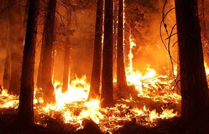Эвакуацию более 100 тыс. человек предписали власти Калифорнии