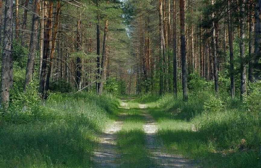 «Чистый лес»: ежегодная экологическая акция стартует в Беларуси