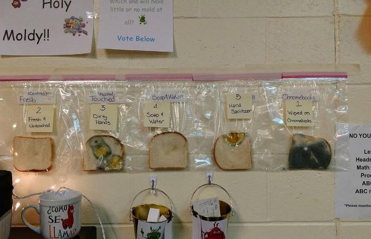 Эксперимент с хлебом заставил школьников всегда мыть руки