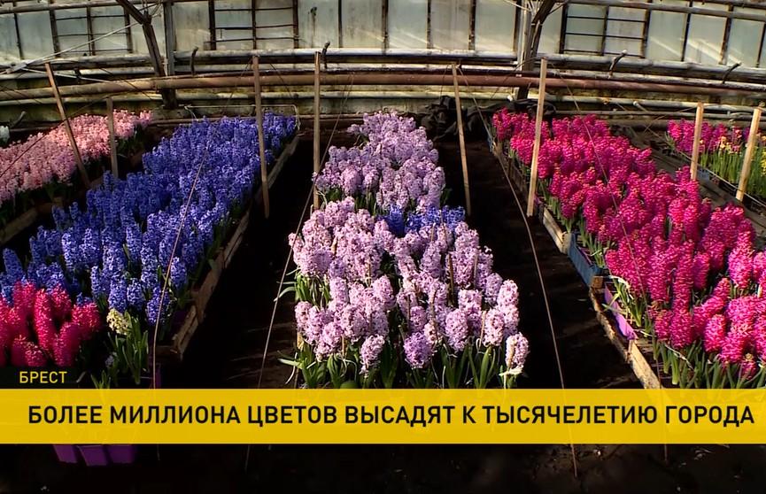 Более миллиона цветов высадят в Бресте к 1000-летию города