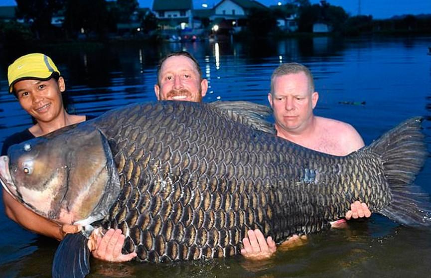 Фотофакт: британский рыбак поймал гигантского карпа