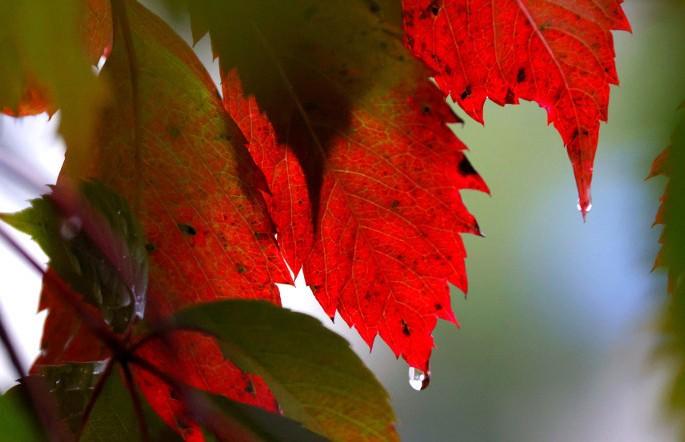 До +18°С ожидается 26 сентября в Беларуси