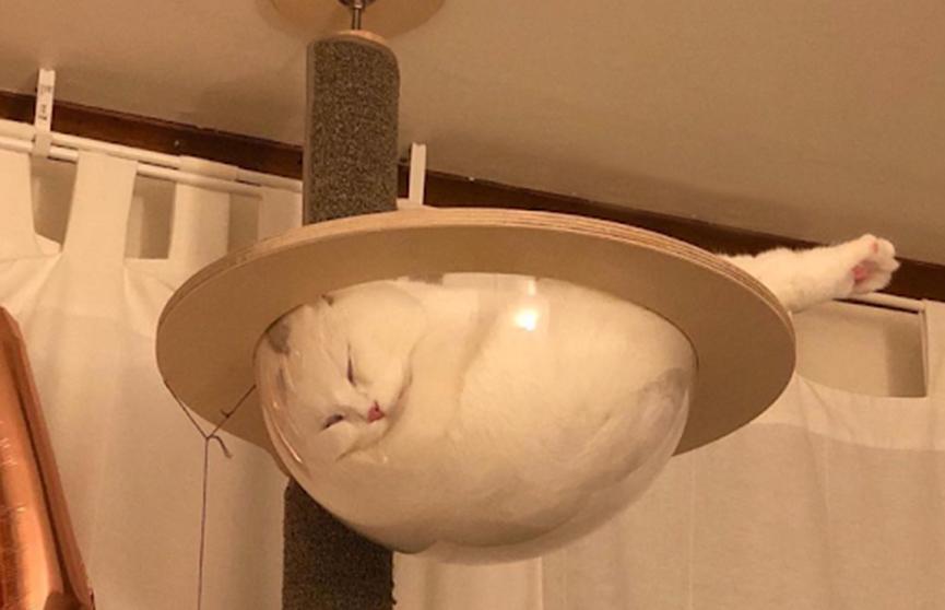 Кот уснул в прозрачном гамаке, а пользователи Reddit сделали из него мем