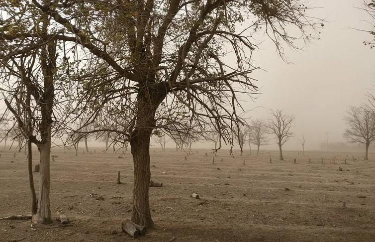 Песчаная буря на юге России: видимость на трассе не более 10 м (ВИДЕО)