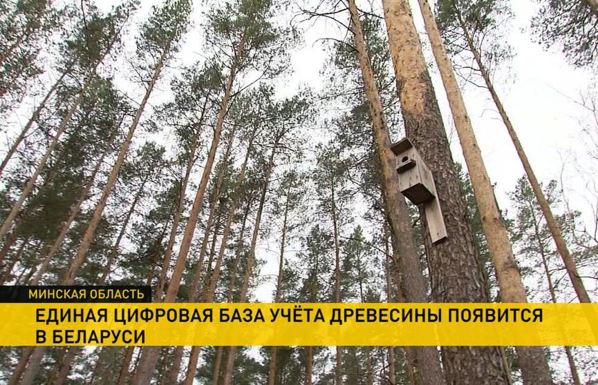 Единая цифровая база учета древесины появится в Беларуси: пилотный проект опробовали в Узденском лесхозе