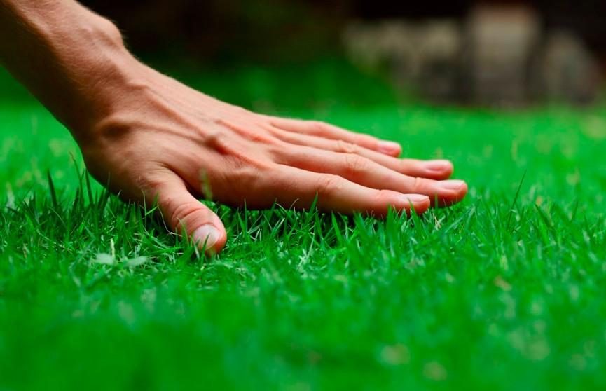 Как сделать идеальный газон на даче своими руками: эксперты рубрики «УДачный гид» раскрывают секреты