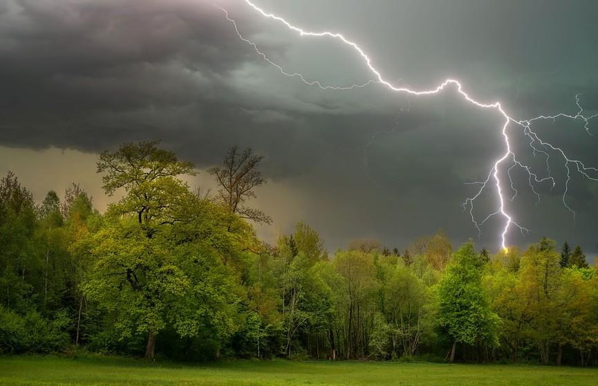 Сильные ливни и грозы прогнозируют 24 июня в Брестской области. Как вести себя во время непогоды? Советы МЧС
