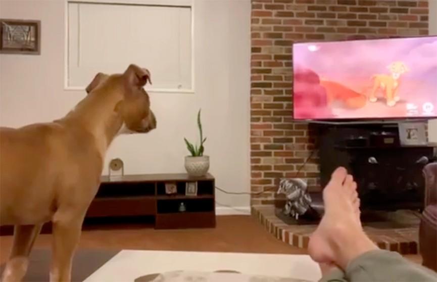 Животные всё понимают: пёс расплакался во время просмотра «Короля Льва»