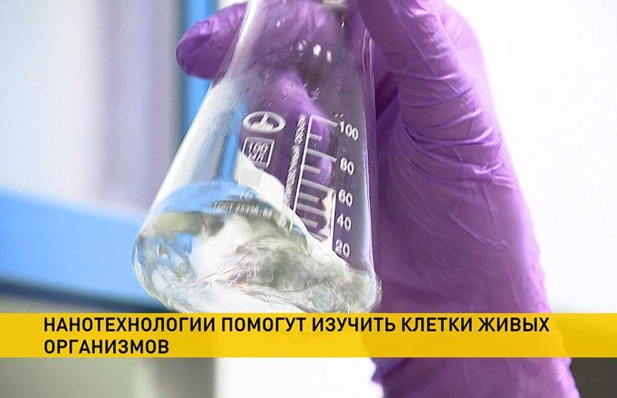 Белорусские ученые изучат клетки живых организмов с помощью нанотехнологий