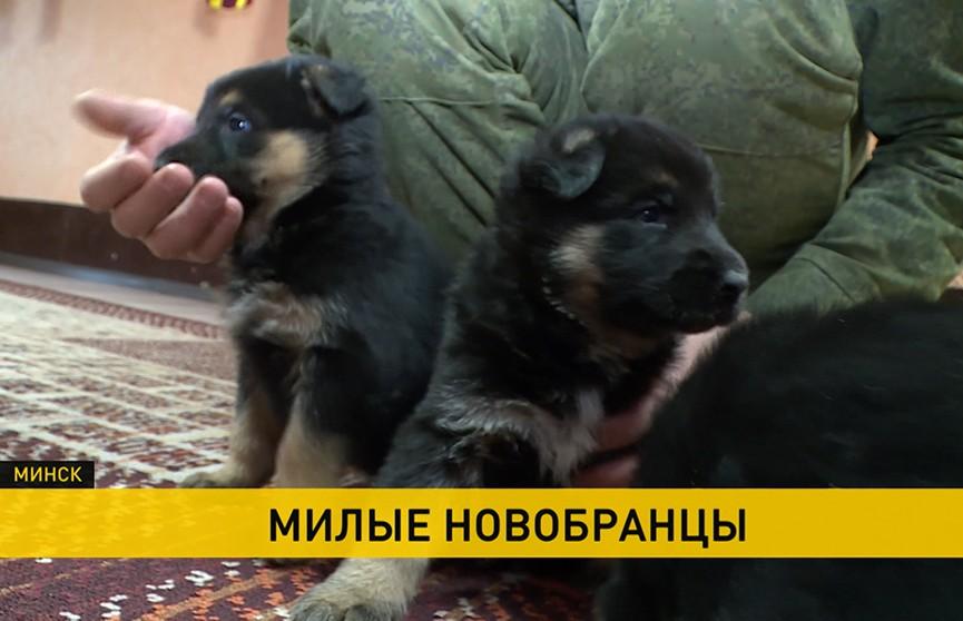 Кинологический центр Вооруженных Сил пополнился тремя щенками немецкой овчарки