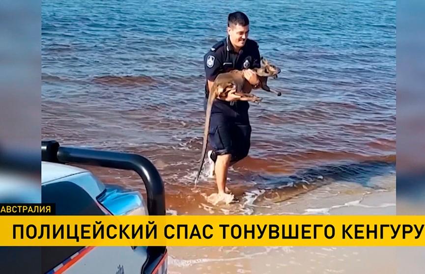 В Австралии полицейский спас тонувшего в море кенгуру (ВИДЕО)