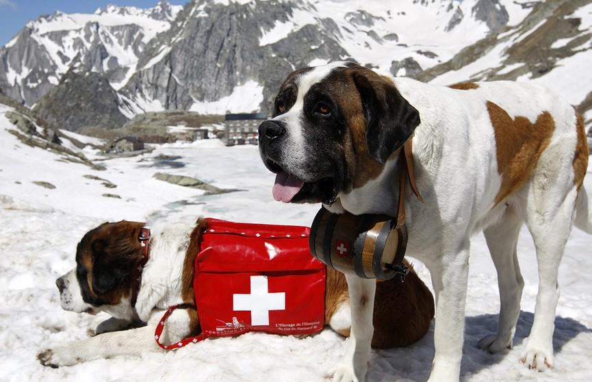 Самые известные собаки-спасатели. Посмотрите на этих четвероногих героев!