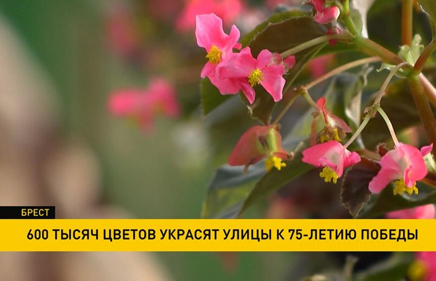 600 тысяч цветов украсят улицы к 75-летию Победы