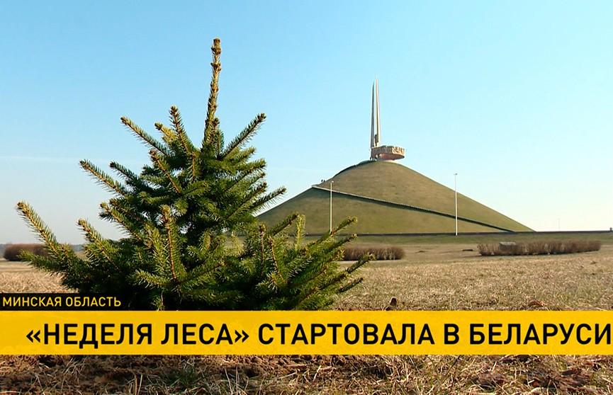 «Неделя леса» стартовала в Беларуси: волонтеры со всей страны высадят миллионы новых деревьев