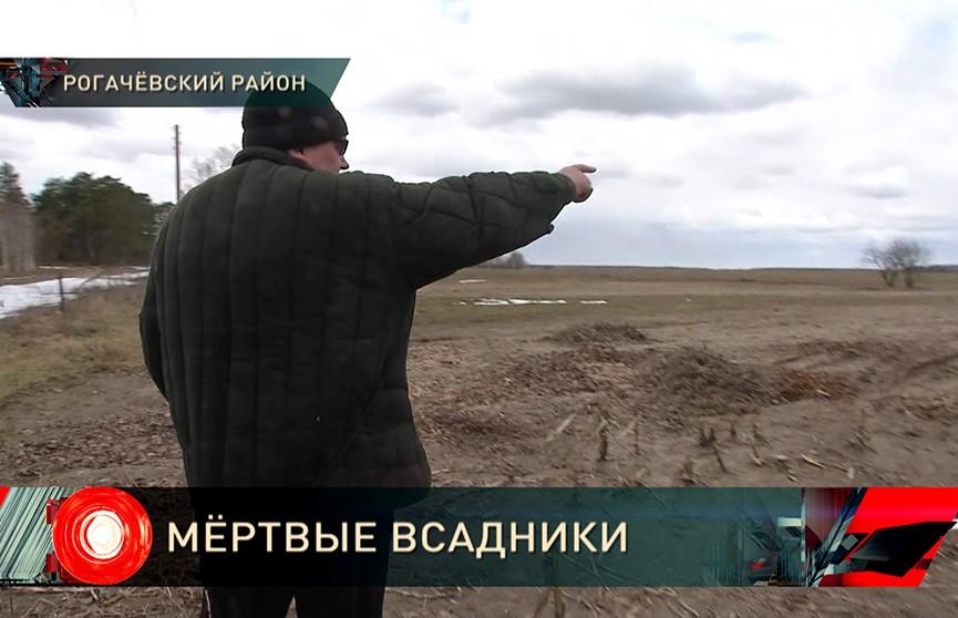 Cмертельная загадка в Рогачёвском районе: в поле найдены три человека. Ни улик, ни следов преступления