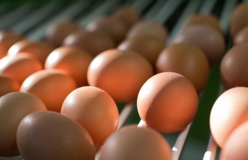 Употреблять яйца часто – опасно для жизни