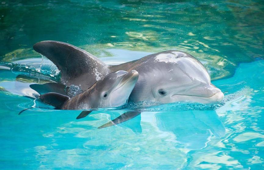 Запрет на плавание с дельфинами ввели в Новой Зеландии