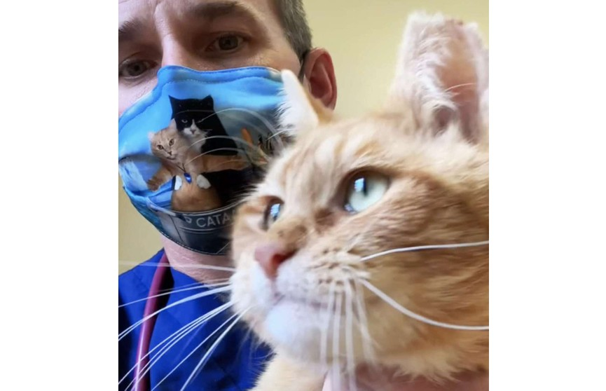 Трехлапого кота хотели усыпить, но ветеринар спас его и забрал домой