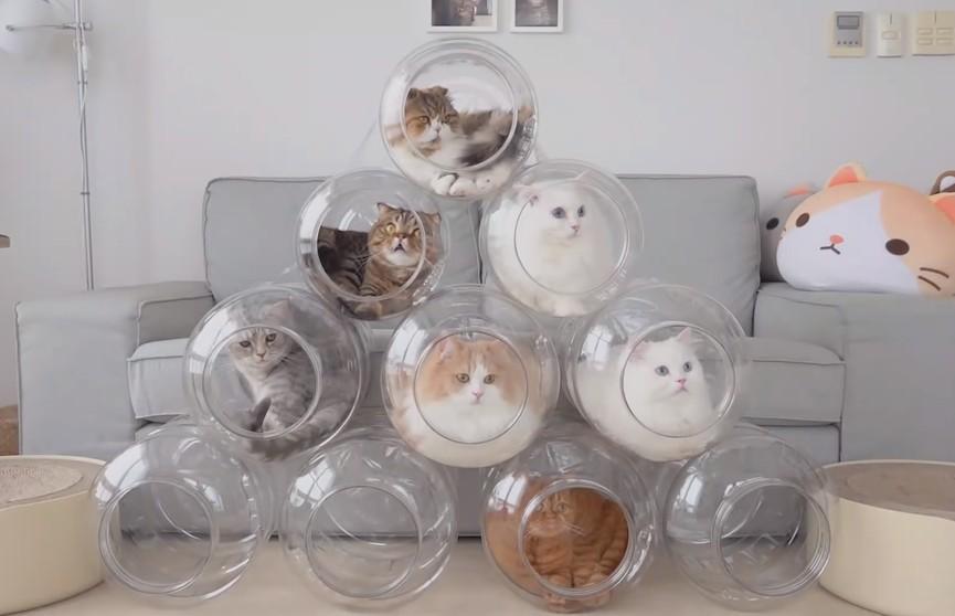 Коты устроили «капсульный отель» в бутылях (ВИДЕО)
