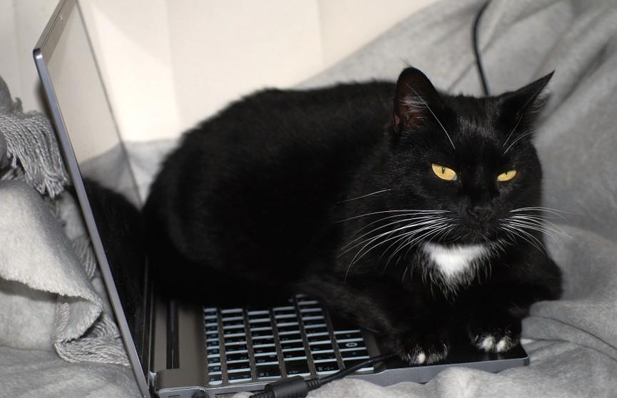 Кот решил помочь работающему хозяину и рассмешил Сеть