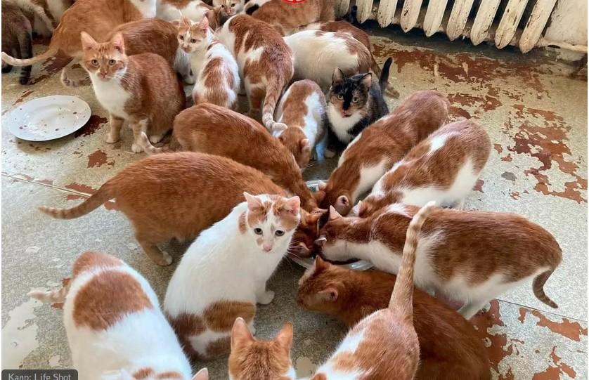 «Было больше». Жительница Москвы держит в квартире 69 кошек
