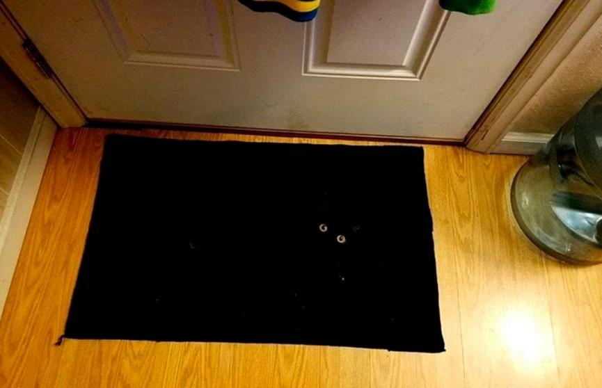 Отличная маскировка! Сможете найти кота на четвертом фото?