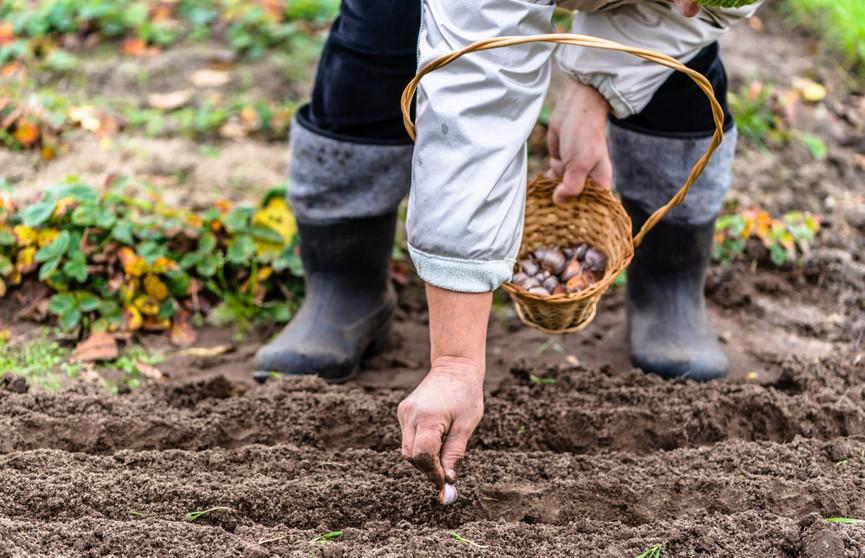 Топ-5 овощей, которые можно сажать под зиму