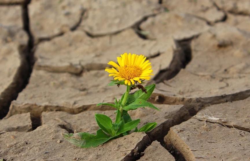 Медленно, но верно: на Земле становится больше непригодных для жизни мест