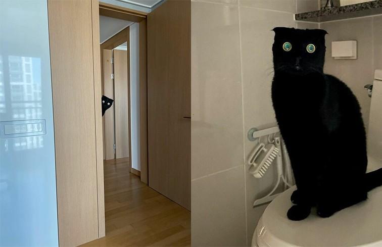 Черная кошка – к безудержному смеху: 7 фотографий забавной пушистой питомицы. Вы влюбитесь в нее с первого взгляда!