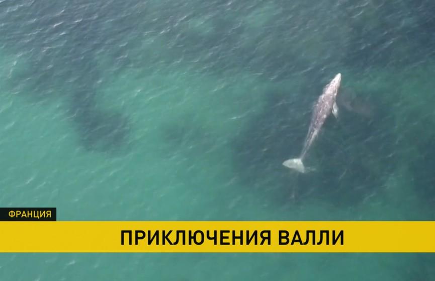 Детеныш серого кита в одиночестве путешествует по Средиземному морю