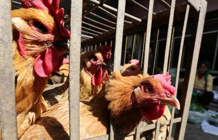 Вспышка птичьего гриппа произошла в Китае