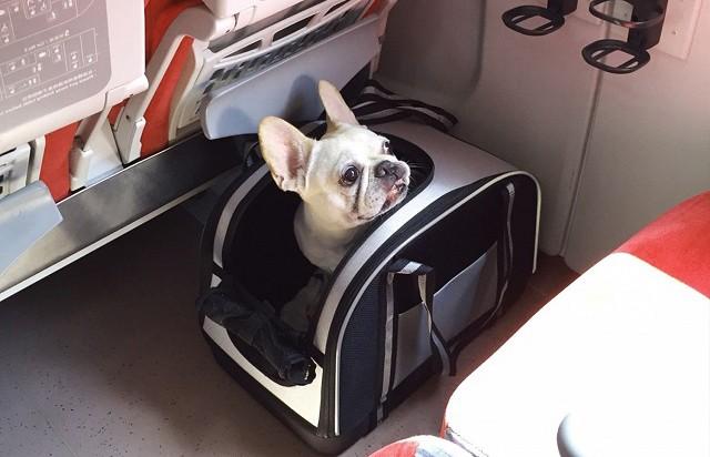 Ветеринар назвал породы собак, для которых авиаперелет может быть смертельно опасен