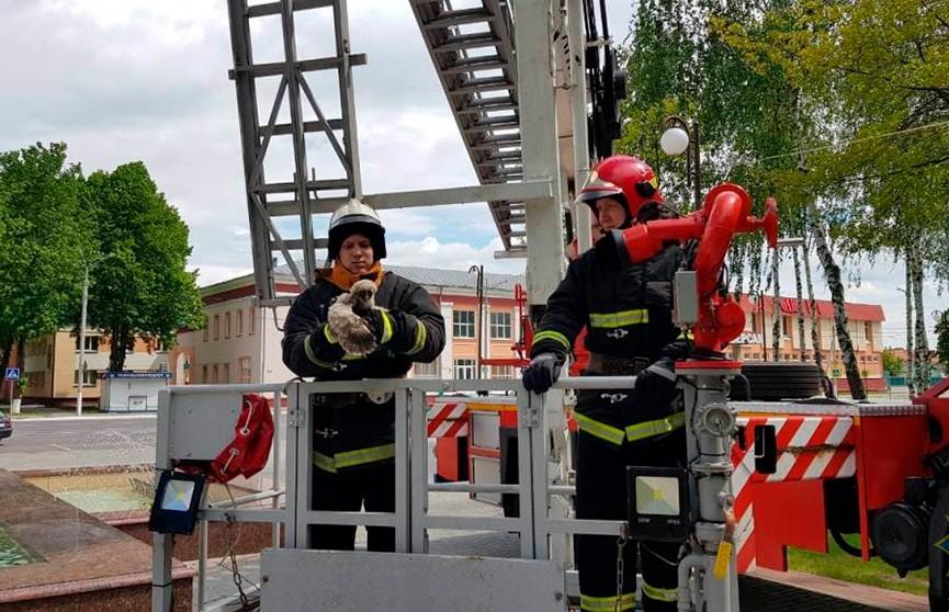 Ветковские спасатели помогли совятам вернуться в гнездо (ФОТО)