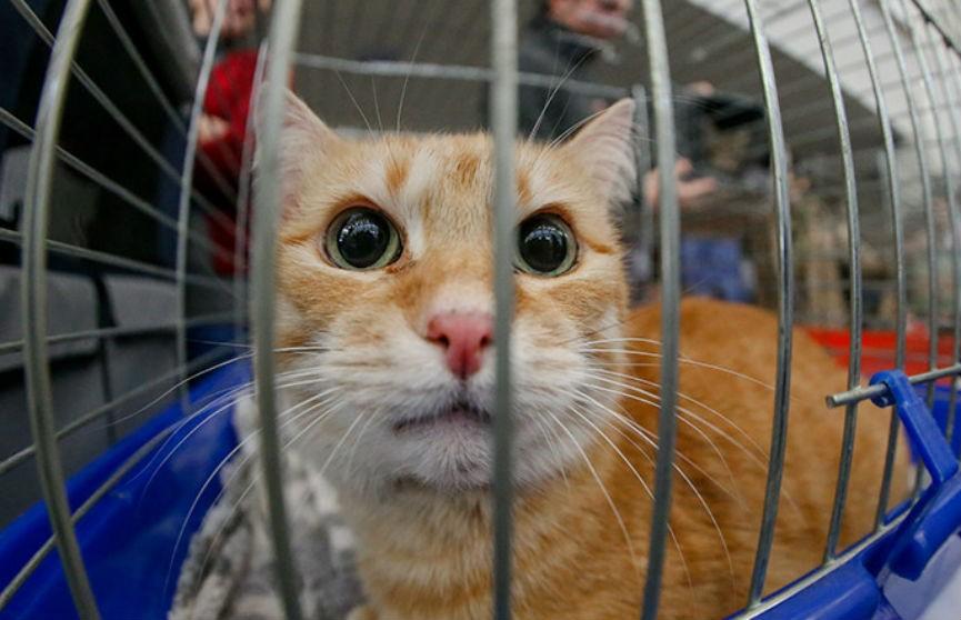 Из-за COVID-19: «Белавиа» временно не будет перевозить домашних животных на чартерных рейсах