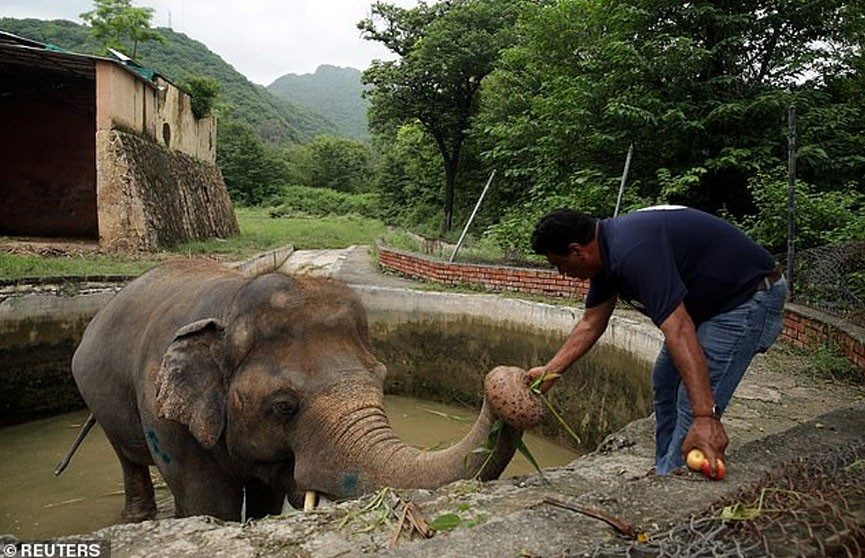 Жившему в маленьком вольере «самому одинокому слону» нашли новый дом