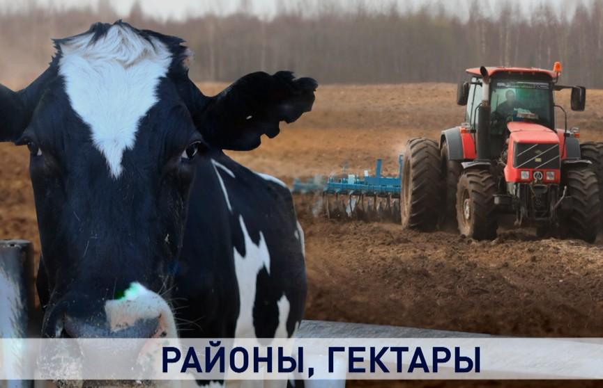 «Или утонем, или останемся на плаву»: что будет с долгами, которые накопились в АПК Витебской области?