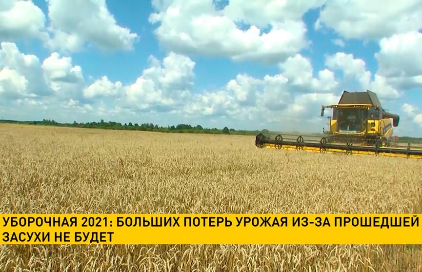 Уборочная-2021: больших потерь урожая из-за прошедшей засухи не будет