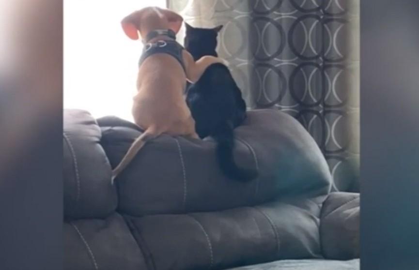 Кот и пёс в обнимку смотрят в окно – очень милое видео