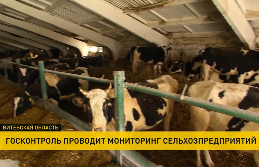Госконтроль возбудил семь уголовных дел после проверки сельхозпредприятий