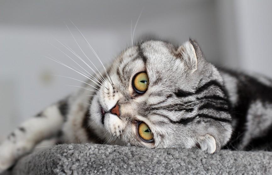 Кот медленно стек по лестнице и рассмешил пользователей Сети. Видео, которое нужно досмотреть до конца