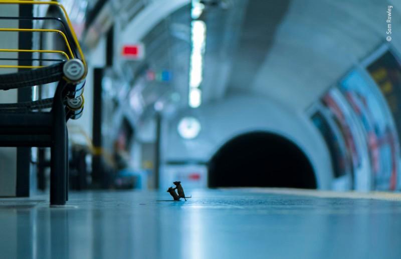 А вы видели, как дерутся мышки? Необычное фото покорило зрителей